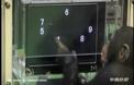 Тест за интелигентност на шимпанзета