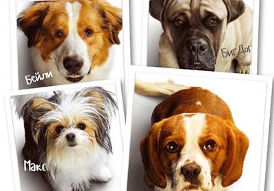 Кучешки живот 2,A Dog's Journey - Български трейлър