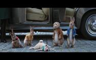 Зайчето Питър: По широкия свят,Peter Rabbit 2: The Runaway - Подгответе се за върховното семейно изживяване
