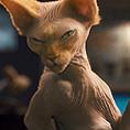 Всичко за филма: Котки и кучета: Отмъщението на Кити